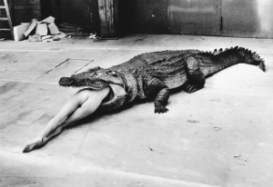 helmut_newton_alligator